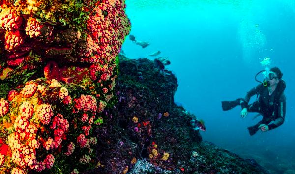 Bioinvasão ameaça o espaço marítimo de forma não tradicional