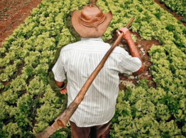 Falta de apoio à agricultura familiar atinge o brasileiro